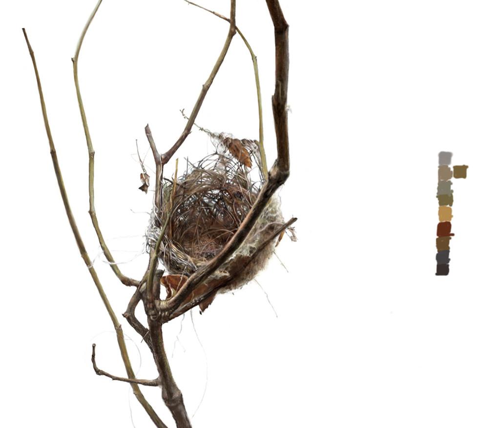 nest-web